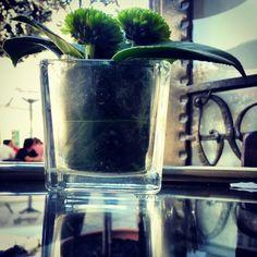 café a brasileira. Braga