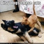 Funny dogs and cat pictures