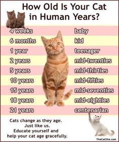 How old is your kitteh? (scheduled via http://www.tailwindapp.com?utm_source=pinterest&utm_medium=twpin&utm_content=post12037292&utm_campaign=scheduler_attribution)