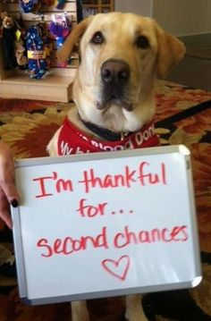 Adopting a dog or cat not only means you saved their life, it may mean they saved you! Give a furkid a chance and ADOPT for Christmas and furever!