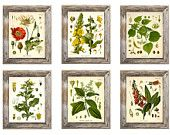 Set of 6 Botanical Prints - Multiple Sizes Available!