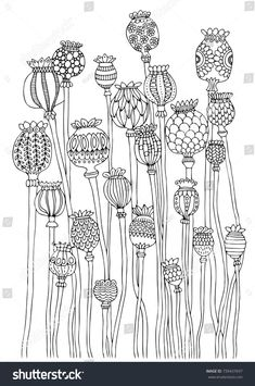 Poppy Head Hand Drawn Picture Sketch for Anti Stress Adult in poppy flower drawing Poppy head Hand drawn picture Sketch for anti stress adult Zentangle Drawings, Doodle Drawings, Doodle Art, Zentangles, Doodle Frames, Doodle Patterns, Zentangle Patterns, Embroidery Patterns, Adult Coloring