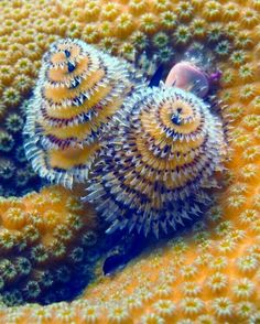 Sea Worms.