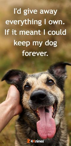 Dogs Have Such Short Dog Pet Quote Pet Quotes Dog Pet