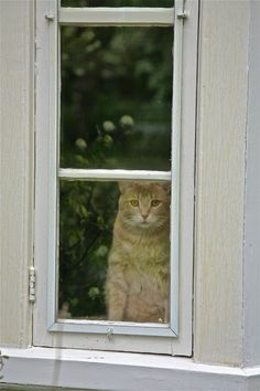 meow in the window