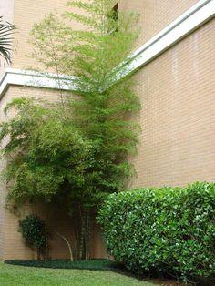 Paisagismo externo de um Edifício residencial.