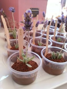 "Adorable individual chocolate pudding cups with cookie crumb ""dirt"", real lavender sprigs, and little wooden spoons {Shooting Stars At Night}"