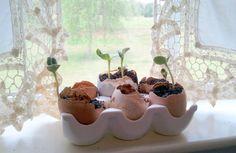 Fresh Eggs Daily: Sunflower Egg Shell Cups