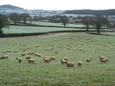 Otter Valley - East Devon Area of Outstanding Natural Beauty