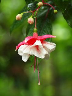 Fuschia Bloom by George-kirk.deviantart.com on @deviantART