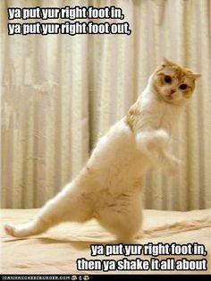 Dancing cat...