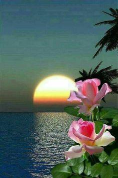 Beautiful Sunset At the Beach Beautiful Moon, Beautiful Sunrise, Beautiful Roses, Beautiful World, Flower Wallpaper, Nature Wallpaper, Image Nature, Nature Pictures, Amazing Nature