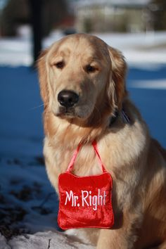LOL!!! Yes, he is!!! Adorable Golden Retriever.   Pet Photography | Dog | Dogs | Puppy   | Puppies |