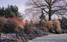 Great gardens to visit: The Sir Harold Hillier Gardens, Hampshire