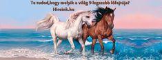 Te tudod melyik a világ 9 legszebb lófajtája? Ha választanod lehetne te melyiket választanád?Szerinted melyik a világ legszebb lófajtája? Aki a lovakat szereti, rossz ember nem lehet! - mondják sokan! Kevés olyan teremtés van a világon, amelynek megjelenése, kisug... Camel, Horses, Tea, Animals, Animales, Animaux, Horse, Animal, Animais