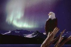 Zeearend - Aurora Borealis  Nathan vindt deze poster erg cool
