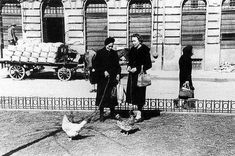 Women walking and grazing chicken on a leash in Budapest, 1946 Spring. Old Pictures, Old Photos, History Photos, Budapest Hungary, Historical Pictures, Vintage Photography, World War Ii, Wonders Of The World, The Past