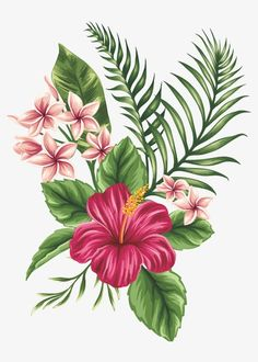 Draw hawaiian flowers best hibiscus drawing ideas hibiscus flower how to draw hawaiian flowers step by step Hawaiian Flowers, Hibiscus Flowers, Tropical Flowers, Hibiscus Flower Tattoos, Hawaiian Flower Drawing, Hibiscus Flower Drawing, Tropical Art, Lilies Flowers, Cactus Flower