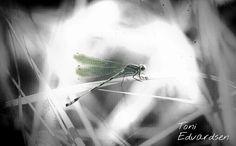 Bugart  #dragonfly #bug #insect #natureart #natureaddict #naturelsker #naturelovers #naturephotography #macroworld #macronature #macro_captures #edit #blurredlines #abstractart #norway #perfectnature by stormtrooper_me