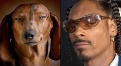 Dogs who look exactly like Celebrities, like lady gaga, John Travolta and Snoop Dogg source:quotespaper