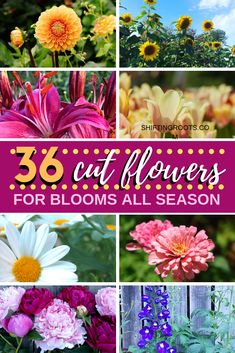 The 36 Best Cut Flowers to Feed Your Floral Arranging Habit All Summer Long - Yes! You can create a cut flower garden for floral arranging all season long. Cut Flowers, Colorful Flowers, Floral Flowers, Seasonal Flowers, Simple Flowers, Growing Flowers, Summer Flowers, Gardening For Beginners, Gardening Tips