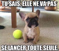 #FunnyPets #CutePets #SoCute #Dog #Cat #CrazyPets #Animaux #Chat #Chien #chatDrole #chienDrole #Mignon #Myfashionlove