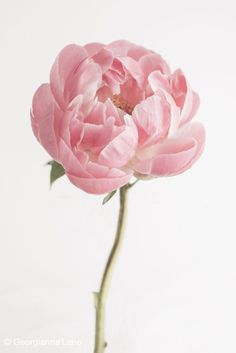 floral still life photography - Google Search