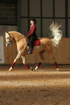 gorgeous palomino