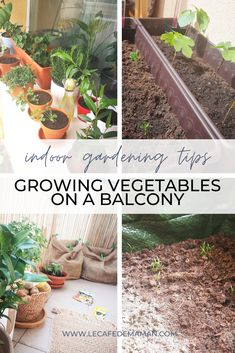 Grow veggies at home even without garden! Lacking space doesn't need to stop you from trying to grow vegetables! Visit us now to learn how to grow potatoes at home using DIY jute bags! Great for a balcony or a small back yard! Sprouting Potatoes, Grow Potatoes, Planting Potatoes, Growing Veggies, Growing Plants, Diy Jute Bags, Diy Crafts On A Budget, Garden Beds, Home And Garden