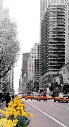 it's yellow , via New York City Feelings The flowers are all blooming right now It is so pretty.