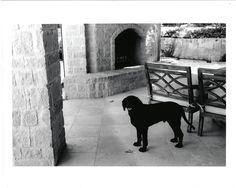 Dogs, Artwork, Photography, Animals, Instagram, Work Of Art, Photograph, Animales, Auguste Rodin Artwork