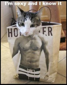 LOL look at this kitty - Posted in Funny, Troll comics and LOL Images - LOL Heaven
