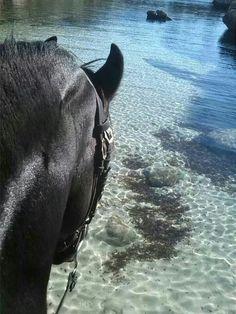 Pura raza Menorquin