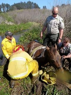 Horse rescue on Clam Beach