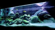 Beautiful setup for african mbuna cichlids