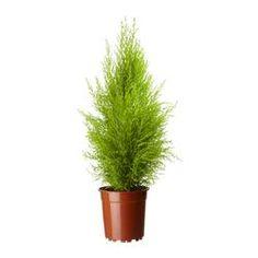 Planter - Planter, blomsterpotter og pidestaller - IKEA