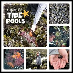 Last weekend my son and I hit the road and headed for the coast. I was seizing this opportunity for a mini-vacation for Bode because I kn. Pool Activities, Summer Activities For Kids, Preschool Ideas, Primary Science, Bainbridge Island, Mini Vacation, Monthly Themes, Tide Pools, Nature Study