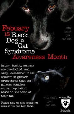 February is Black Dog & Cat Syndrome Awareness Month. I personally prefer black animals :-) Animal Shelter, Animal Rescue, Shelter Dogs, Shelters, Save Animals, Black Animals, Animal Welfare, Pet Adoption, Animal Adoption