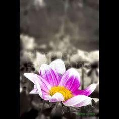 Flora flor malva F00024 de Wifred Llimona