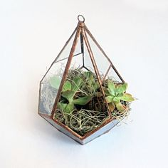 Teardrop Terrarium by WILDER for TMOD TREASURES http://tmod.com.au/product/terrarium