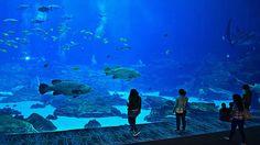 Das Bay Aquarium in Atlanta ist wahrlich eine Reise wert - Hier verbunden mit einer 14-tägigen Südstaaten Rundreise. (Bild:pixabay.com) #usamietwagentips #usa #atlanta