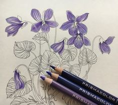 No photo description available. Colored Pencil Tutorial, Colored Pencil Techniques, Coloring Book Art, Colouring Pages, Adult Coloring, Prismacolor, Violet Pastel, Blending Colored Pencils, Leaf Drawing