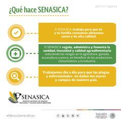 ¿Qué hace SENASICA? SAGARPA SAGARPAMX #MéxicoSiembraÉxito