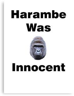 Harambe Was Innocent