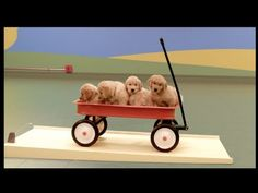 ▶ Dog Goldberg Machine by Beneful® - YouTube - Beneful takes play to new places with this inventive Dog Goldberg machine powered by dogs and their favorite toys.
