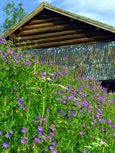 Bonderomantikken blomstrer i Rauland