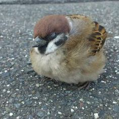 Young sparrow taking a nap