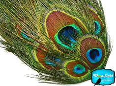 1 Piece  NATURAL Uncut Peacock Eye Feather by MoonlightFeatherInc, $5.75