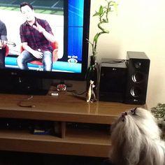 Como gosta de um tv essa Lolla!  Em set 2013
