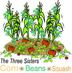 Three Sisters Garden - an ancient method of gardening using an intercropping system which grows corn, beans, and squash crops simultaneously in the same growing area #food #edible #vegetable #gardening